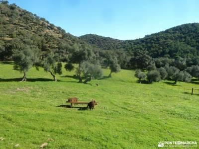 Sierra Aracena-Minas RíoTinto;torrelaguna botas de montaña camino madroño rutas